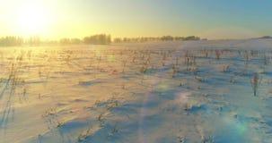 A ideia aérea do zangão da paisagem fria do inverno com campo ártico, árvores cobriu com de geada da neve e da manhã os raios do  vídeos de arquivo