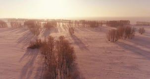 A ideia aérea do zangão da paisagem fria do inverno com campo ártico, árvores cobriu com de geada da neve e da manhã os raios do  filme