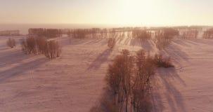 A ideia aérea do zangão da paisagem fria do inverno com campo ártico, árvores cobriu com de geada da neve e da manhã os raios do  video estoque