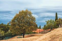 Ideia bonita da natureza mediterrânea com a árvore no por do sol e com uma nuvem bonita no céu Fotos de Stock Royalty Free