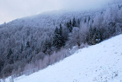 Ideia bonita da parte superior enevoada das montanhas Carpathian no inverno Imagens de Stock