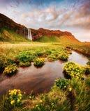 Ideia bonita do campo verde de florescência Lugar Seljalandfos do lugar Imagens de Stock Royalty Free