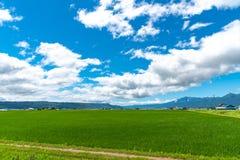 Ideia bonita do campo verde no dia ensolarado do verão na cidade de Furano imagens de stock royalty free