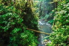Ideia cênico da queda bonita da água de Sol Duc no parque nacional olímpico em horas de verão, Washington State EUA Fotos de Stock