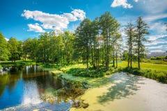 Ideia cênico do verão Sunny Forest Woods And Wild Bog nave fotografia de stock royalty free