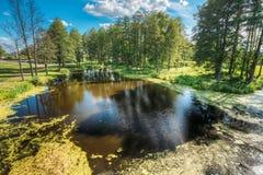 Ideia cênico do verão Sunny Forest Woods And Wild Bog nave imagens de stock royalty free