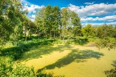 Ideia cênico do verão Sunny Forest Woods And Wild Bog nave foto de stock royalty free