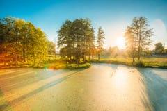 Ideia cênico do verão Sunny Forest Woods And Wild Bog nave imagem de stock royalty free