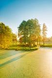 Ideia cênico do verão Sunny Forest Woods And Wild Bog nave imagem de stock