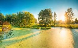 Ideia cênico do verão Sunny Forest Woods And Wild Bog nave fotos de stock royalty free