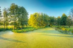 Ideia cênico do verão Sunny Forest Woods And Wild Bog nave imagens de stock