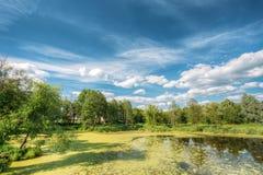 Ideia cênico do verão Sunny Forest Woods And Wild Bog nave n foto de stock royalty free