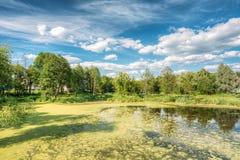 Ideia cênico do verão Sunny Forest Woods And Wild Bog nave n fotografia de stock