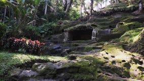 Ideia da inclinação musgo-coberta rochosa tropical com a ameia retangular pequena nela video estoque