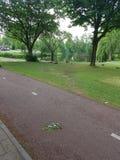 Ideia da natureza verde Fotografia de Stock