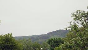 Ideia da paisagem da árvore de floresta da montanha no embaçamento Floresta da nuvem do pinheiro Árvore verde video estoque