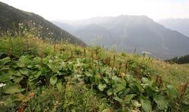Ideia da paisagem do verão da montanha Foto de Stock