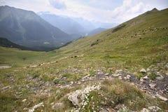 Ideia da paisagem do verão das pastagem da montanha Imagem de Stock