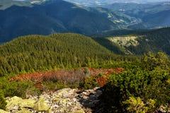 Ideia da paisagem da floresta da montanha sob a luz solar no meio do verão com o céu azul pesado como um fundo Imagens de Stock Royalty Free