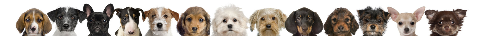 Ideia das cabeças do filhote de cachorro Imagens de Stock