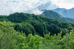 Ideia das inclinações enevoadas das montanhas cobertos de vegetação com a floresta decíduo verde através das árvores fotos de stock