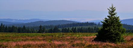 ideia de ângulo larga da paisagem com uma árvore spruce pequena no primeiro plano fotos de stock