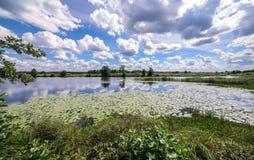 Ideia de ângulo larga de um pântano do verão e de reflexões da nuvem na água entre lírios de água amarela Imagens de Stock
