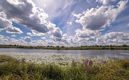 Ideia de ângulo larga de um pântano do verão e de reflexões da nuvem na água entre lírios de água amarela Foto de Stock Royalty Free