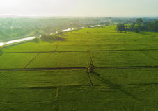 Ideia de Arial do campo de almofada verde em Ásia Oriental durante o nascer do sol fotografia de stock