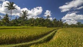 Ideia de campos do arroz em Bali foto de stock