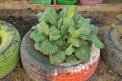 Ideia de DIY reciclar do pneu usado com flores ou planta na borracha velha Foto de Stock