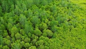 A ideia de olho de pássaro de uma extensão vasta do verde vívido Spurred a floresta da árvore dos manguezais da província de Rayo filme