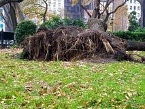 Ideia de raizes erigidas da árvore foto de stock royalty free