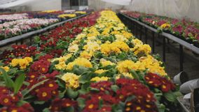 Ideia de tipos coloridos diferentes das flores na estufa 4K vídeos de arquivo