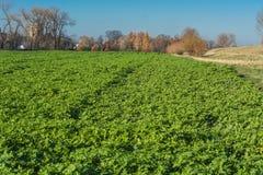 Ideia de um campo de Agra no inverno Fotos de Stock