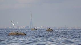 Ideia de um panorama de St Petersburg do Golfo da Finlândia Sob a torre da cidade de Gazprom da construção no centro video estoque