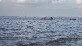 Ideia de um panorama de St Petersburg do Golfo da Finl?ndia Sob a torre da cidade de Gazprom da constru??o no centro vídeos de arquivo