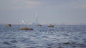 Ideia de um panorama de St Petersburg do Golfo da Finl?ndia Sob a torre da cidade de Gazprom da constru??o no centro filme