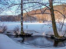 Ideia de uma paisagem do inverno na floresta de Thuringian fotografia de stock royalty free