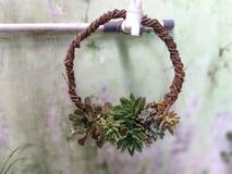 Ideia do arranjo das plantas carnudas com coletor ideal foto de stock