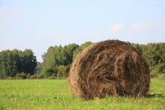 Ideia do campo de exploração agrícola que mostra pacotes do feno Foto de Stock Royalty Free