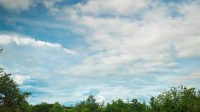 Ideia do cloudscape que move-se sobre as árvores em uma floresta de Tailândia video estoque