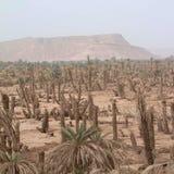 Ideia do cultivo das palmas foto de stock