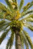 Ideia do detalhe da parte superior do palmtree imagem de stock