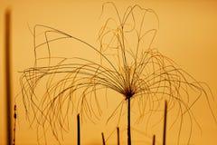 Flowwer de Papirus Imagem de Stock