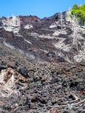 Ideia do fluxo de lava endurecido na inclinação de Etna imagem de stock royalty free