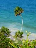 Ideia do fundo tropical com palmeira Fotografia de Stock Royalty Free