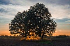 A ideia do por do sol através das árvores no campo Foto de Stock Royalty Free
