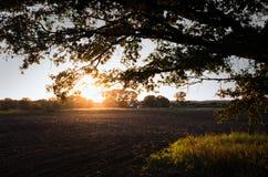 A ideia do por do sol através das árvores no campo Fotos de Stock Royalty Free