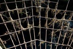 Ideia do reforço do metal sob a forma de uma Web contra a abertura, o sol no por do sol imagem de stock royalty free